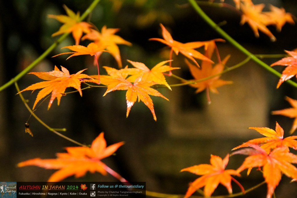Fushimi_Inari_Shrine_Blog_053