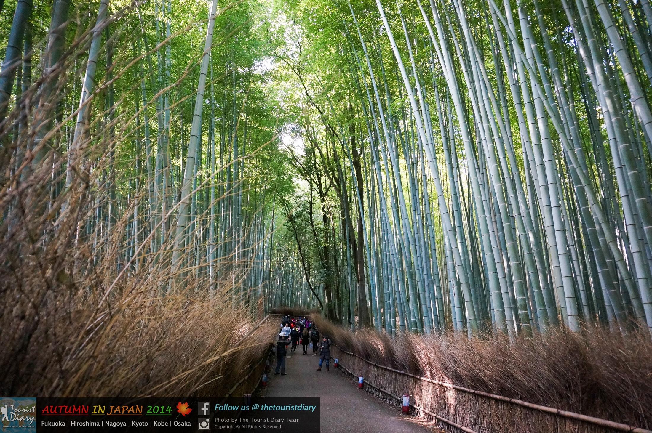 Kyoto | Arashiyama เดินเลียบป่าไผ่ นั่งรถไฟสายโรแมนติก