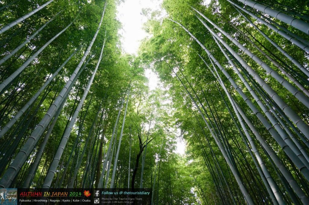 Arashiyama_Blog_025