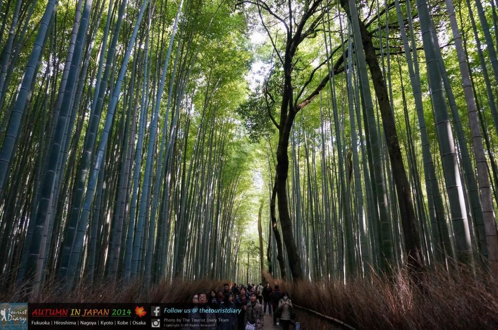 Arashiyama_Blog_026