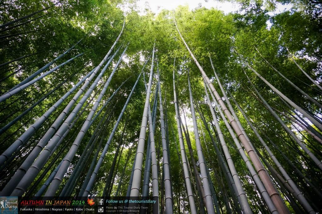 Arashiyama_Blog_027