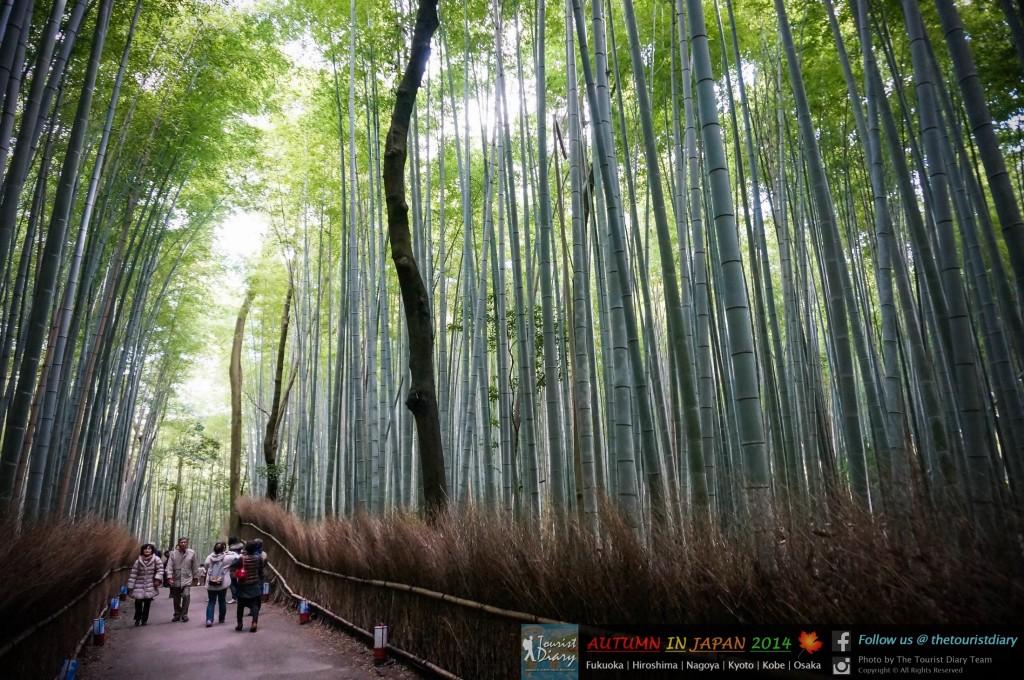 Arashiyama_Blog_028