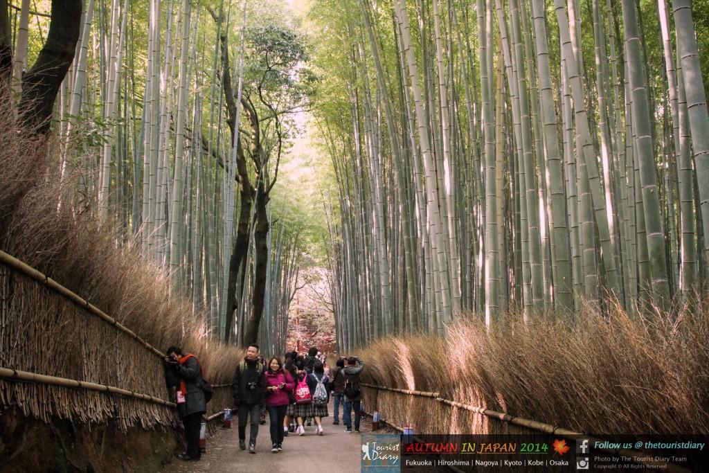 Arashiyama_Blog_029