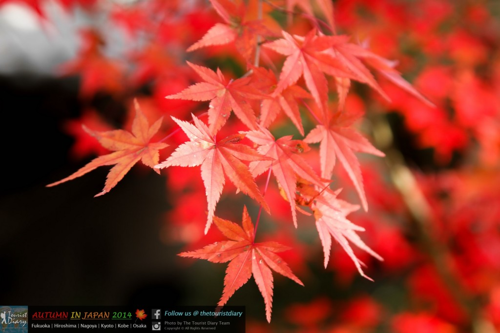 Eikando_Temple_Blog_036