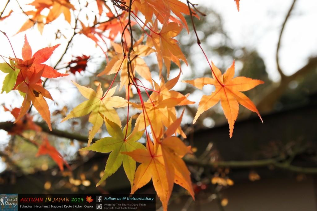 Eikando_Temple_Blog_041