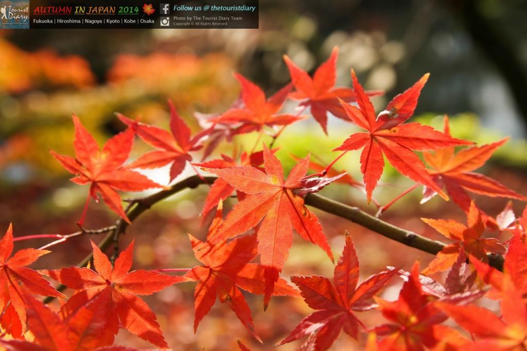 Eikando_Temple_Blog_043