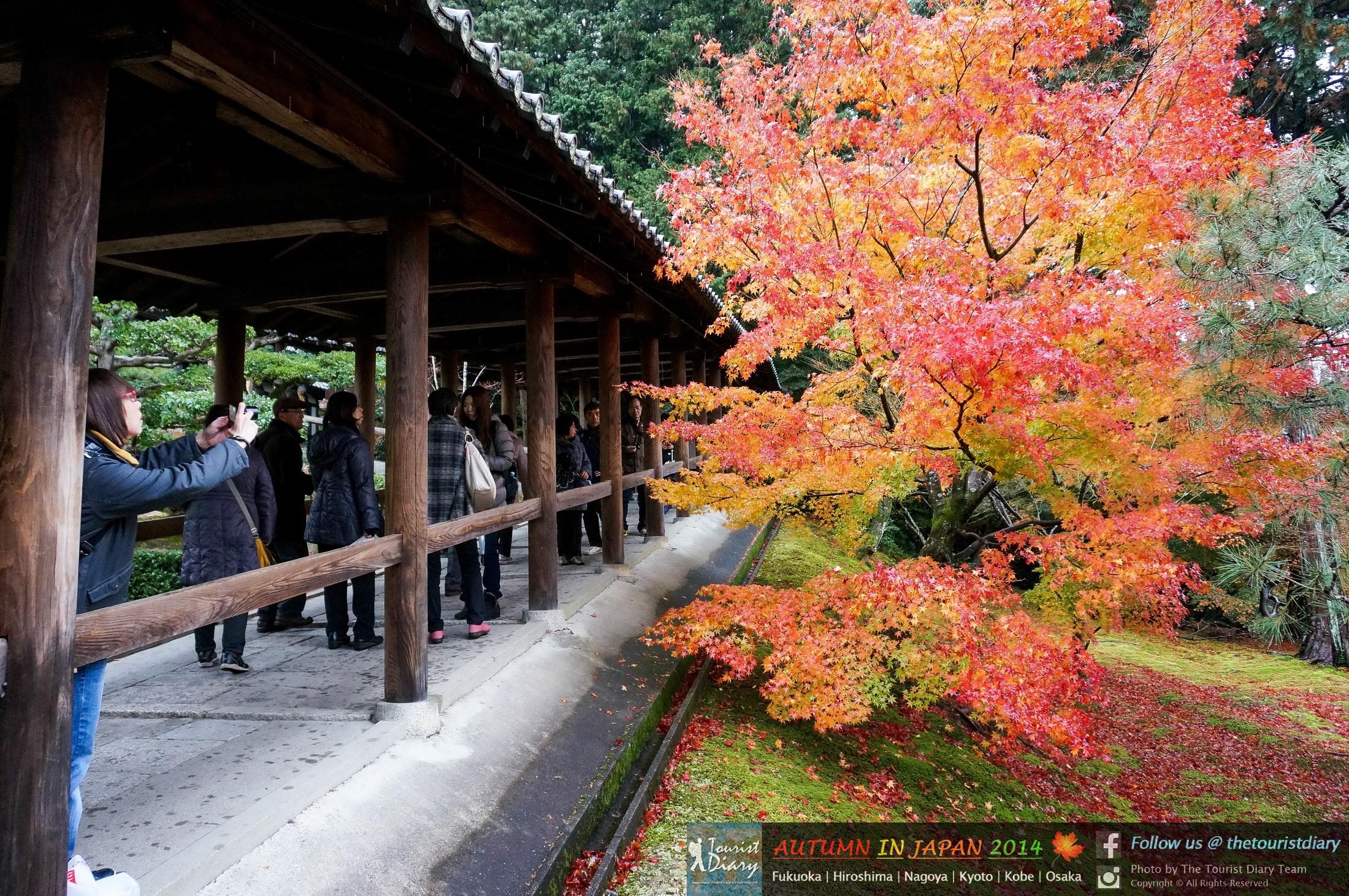 Kyoto | Tofukuji Temple วัดโทฟุคุจิ