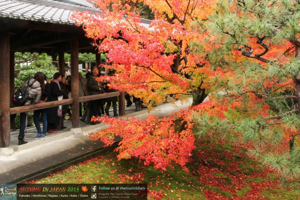 Tofukuji_Temple_Blog_018