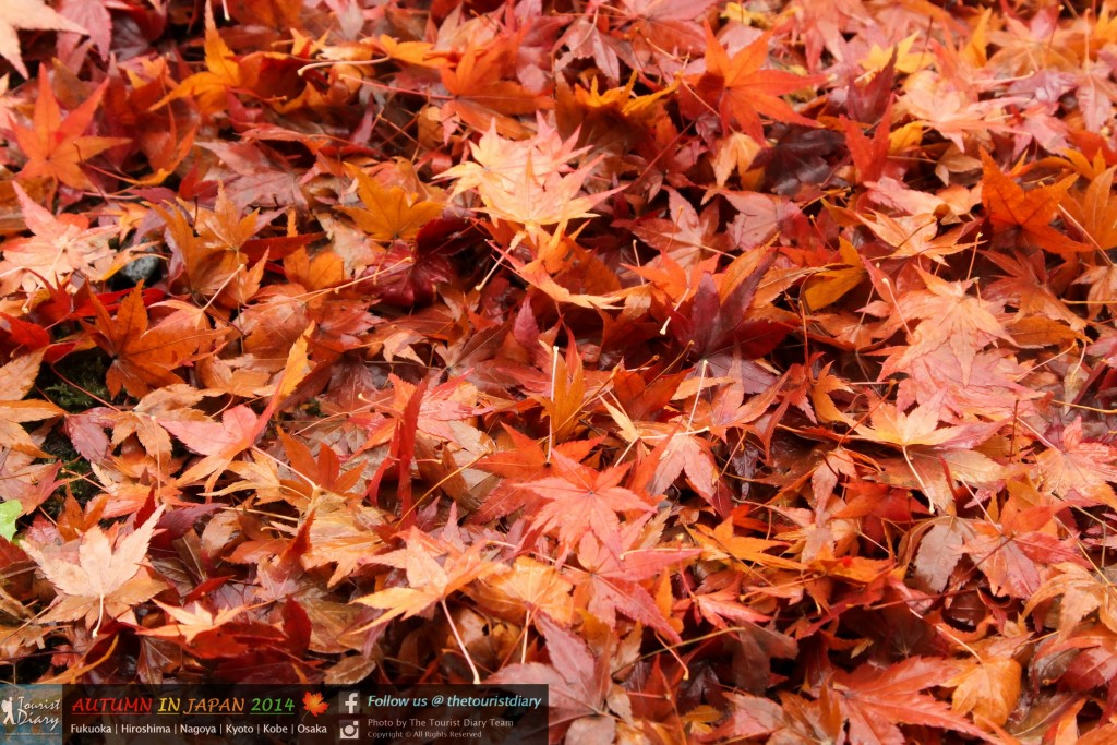 Tofukuji_Temple_Blog_023