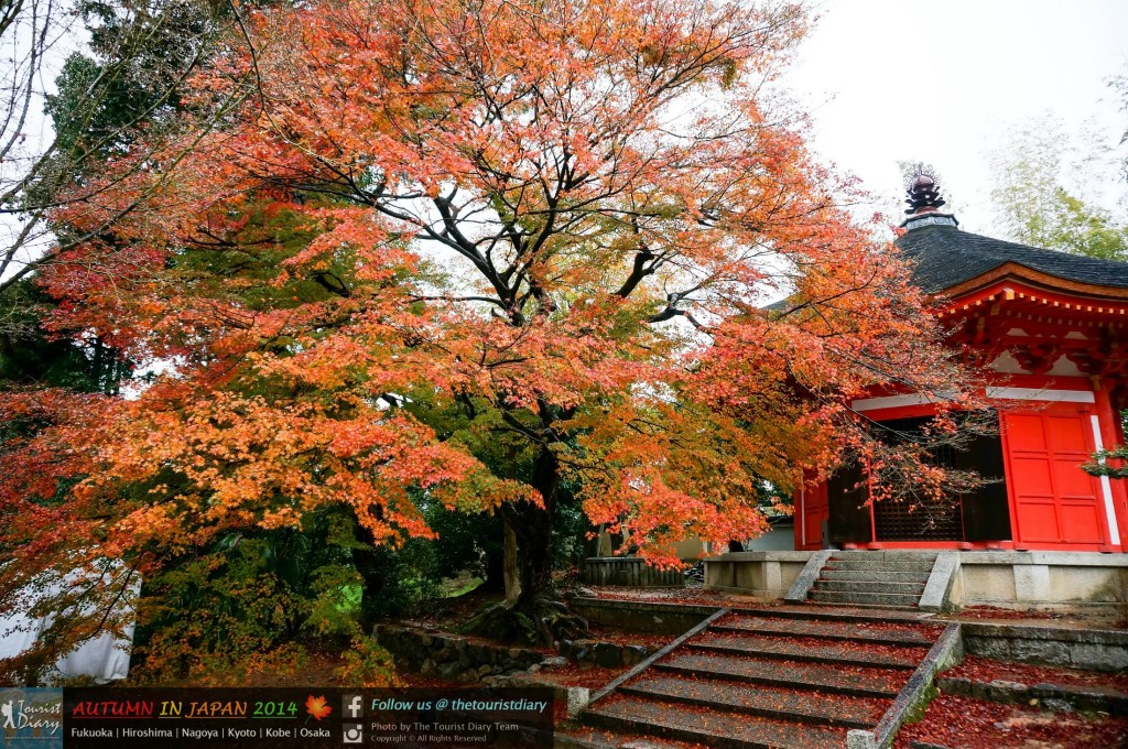 Tofukuji_Temple_Blog_029